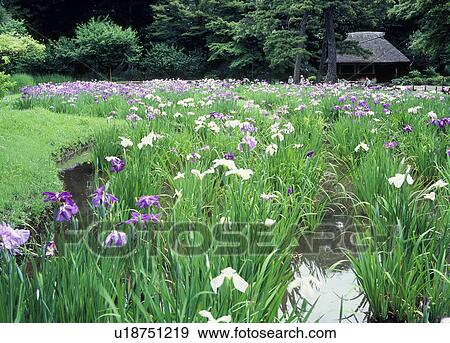 Banque de photographies iris koishikawa korakuen for Jardin korakuen
