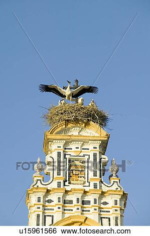 Closeup Of Nesting European Storks On White Cathedral Tower With Beautiful Sunlight In Village Of Southern Spain Off Highway A49 West Of Sevilla Stock Photograph U15961566 Fotosearch