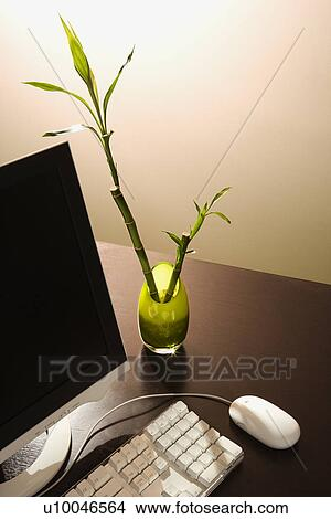 Stock Photo Of Computer On Desk With Lucky Bamboo In Vase U10046564