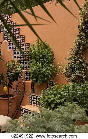 Colección de foto - italiano, estilo, jardín, patio, chelsea, flor ...