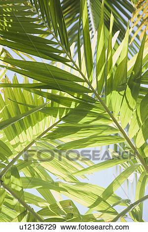 Close Up Of Tropical Leaves Stock Photo U12136729 Fotosearch Textures.com is a website that offers digital pictures of all sorts of materials. fotosearch