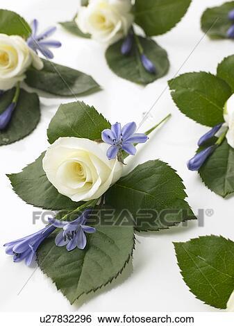 Banque D Images Boite Rempli A Rose Blanche Petits Bouquets