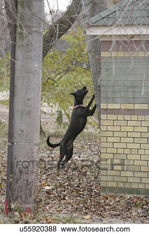 Dog barking up a tree, chased a squirrel Stock Photo