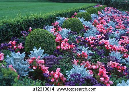 banque de photo bleu rouge parterre fleurs buisson accents u12313814 recherchez des. Black Bedroom Furniture Sets. Home Design Ideas