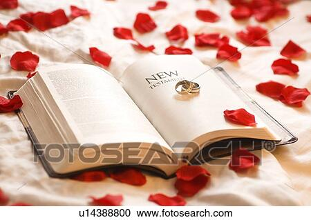 stock photography of rings on the bible wedding rings on the new