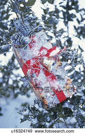 Archivio Fotografico   Presente Natale, Su, Agrifoglio, Albero, Con, Neve,  Vista Frontale