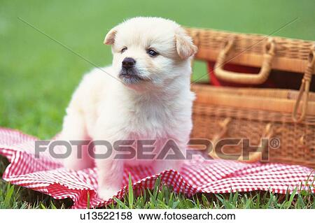 A Crossbreed Dog Standing On Red Blanket In The Grass Looking Sideways Side View