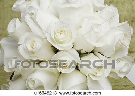 Stock Photo Of Bunch Of White Roses Close Up U16645213 Search