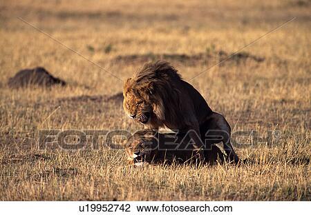 Afbeeldingen Van Leeuwen