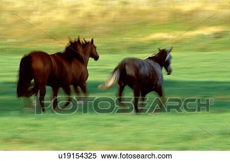 stock afbeelding - wilde paarden, rennende u19154325 - zoek stock