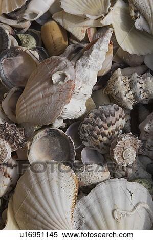 ストックイメージ - 巻き貝の殻,...