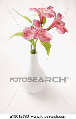 Stock Photo Of Three Pink Alstroemeria Lilies In A White Vase