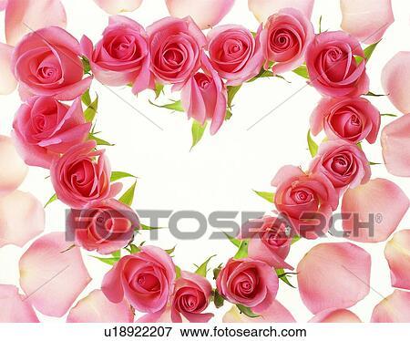 Image Cadre Bord Amour Fleur Rose U18922207 Recherchez Des