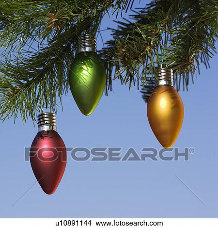 Red Green And Orange Ornaments Hanging On Christmas Tree Branch Against Blue Background Picture