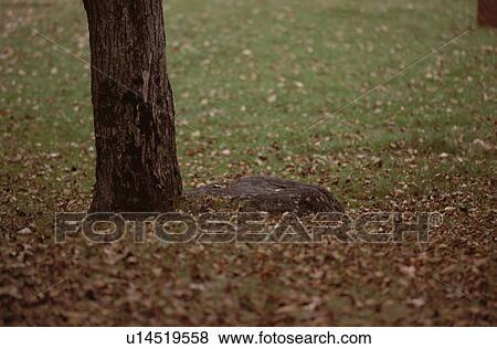 Fotos - secado, hojas, cerca, raíz árbol u14519558 - Buscar fotos e ...
