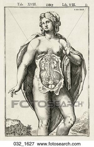 Stock Illustration of Antique Anatomical Illustration (engraving) of ...