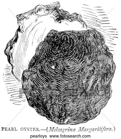 Aquatic life - other. A pearl oyster. Stock Illustration ...