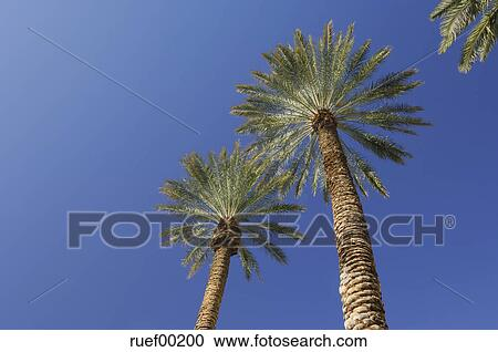 stock photography of usa nevada las vegas palm trees against blue