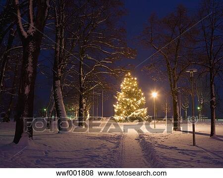 österreich Weihnachtsbaum.österreich Salzkammergut Mondsee Weihnachtsbaum Nacht Stock Foto