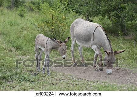 Bilder von weiblichem Esel