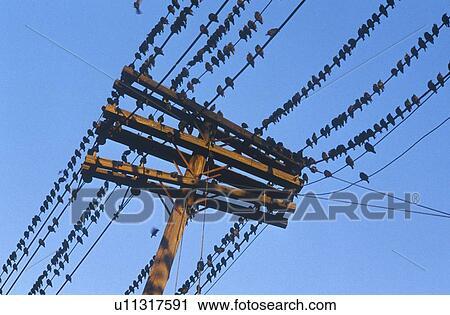 Stock Fotografie - silhouette, von, vögel, auf, telefonleitung ...
